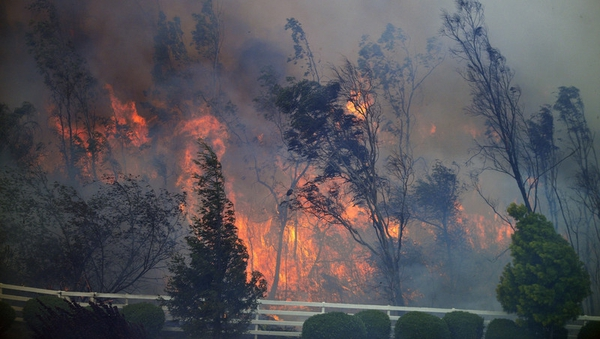 Trees burn as the Bernardo fire moves through a canyon between the Rancho Santa Fe and Fairbanks neighbourhoods north of San Diego