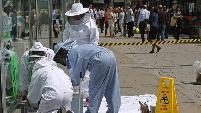 The swarm is put into a box by bee keepers from the John Lewis Partnership and Westminster Cathedral