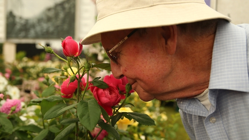 A visitor smells roses on a stand in the Great Pavilion at the 2014 Chelsea Flower Show, UK