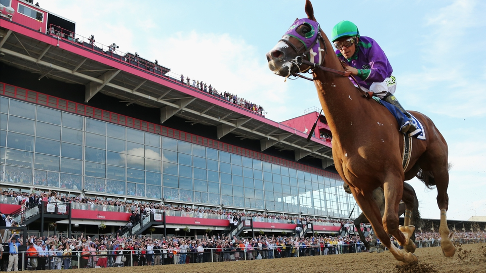 A close-up of California Chrome en route to winning the 139th running of the Preakness Stakes at Pimlico Race Course, Baltimore