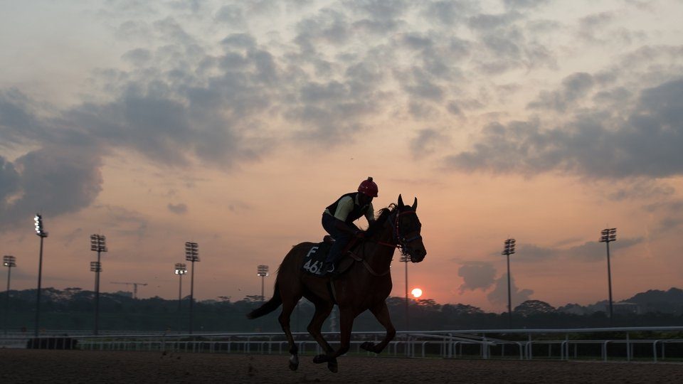 A horse is ridden by a work rider during a Singapore Turf Club trackwork session