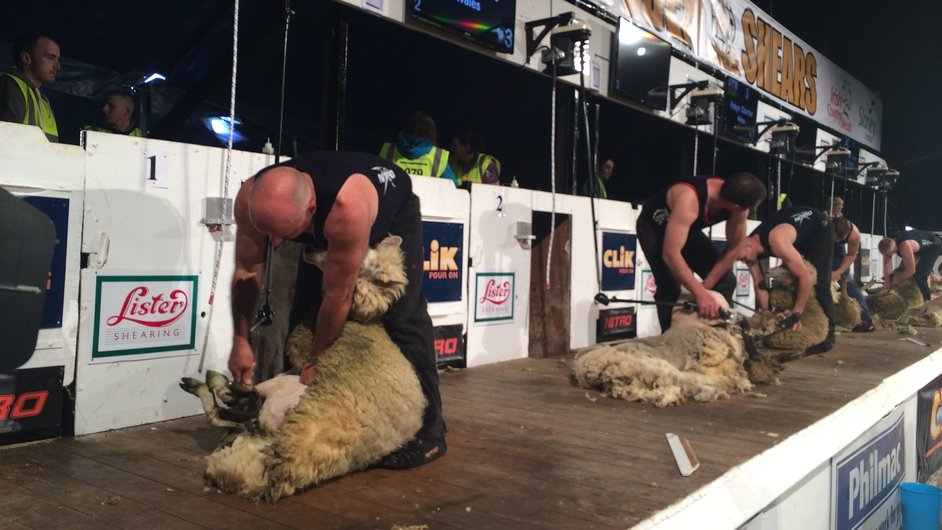 Competitors take part in the 'Golden Shears' world sheep shearing championships in Gorey, Co Wexford