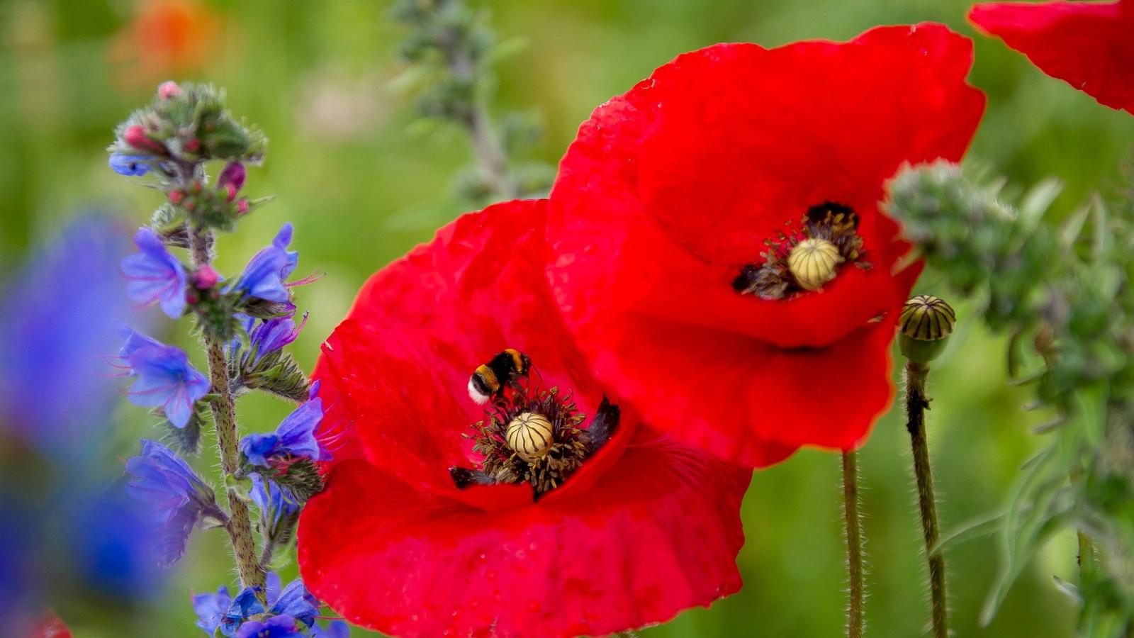 Warning over 'alarming decline' in pollinator species