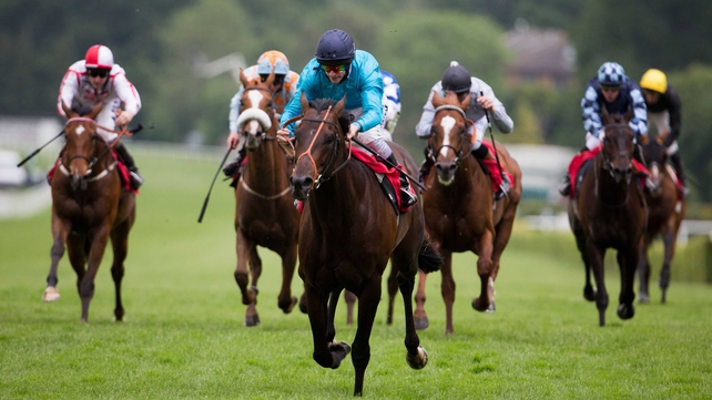 Brown Panther looks set to go in the Irish St Leger