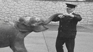 Baby Elephant Arrives in Dublin