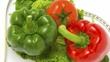 Health Food Entrepreneurs
