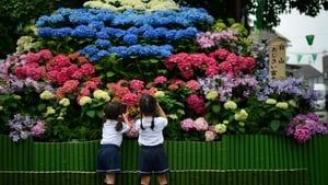 Children take pictures of hydrangea displaying the shape of Mount Fuji at a festival at Tokyo's Hakusan Shrine