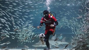 A South Korean diver in soccer uniform swims with sardines at the Coex Aquarium, Seoul