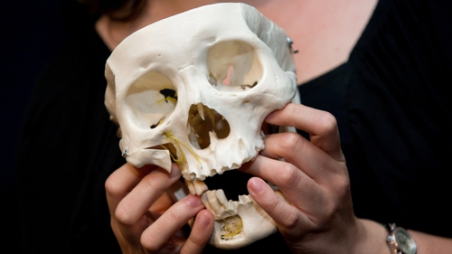 Scientists say male and female faces are different as the parts of the skull that break in fights are bigger in males