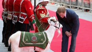 Prince Harry greets a UK reserve battalion's mascot and his handler at the 50th anniversary screening of the film Zulu in London