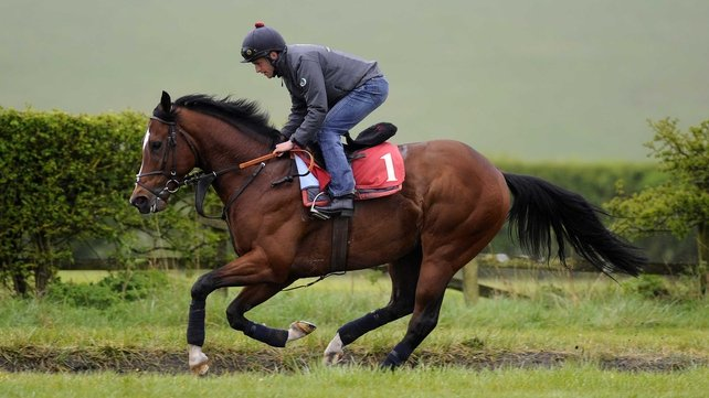 Toronado has been off the track since disappointing in the Juddmonte International Stakes at York last season