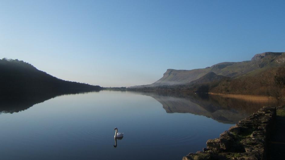 A swan on Glencar Lake in Co Sligo (Pic: Maurice Ryan)