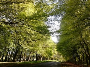 Kathleen Treacy sent in this photo of a tree-lined road at the Curragh in Co Kildare