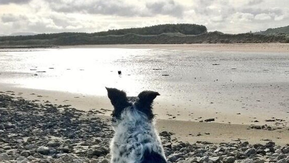 A dog looks out across the water at Rosses Point towards Ben Bulben, Co Sligo (pic: @WalkiesSligo)