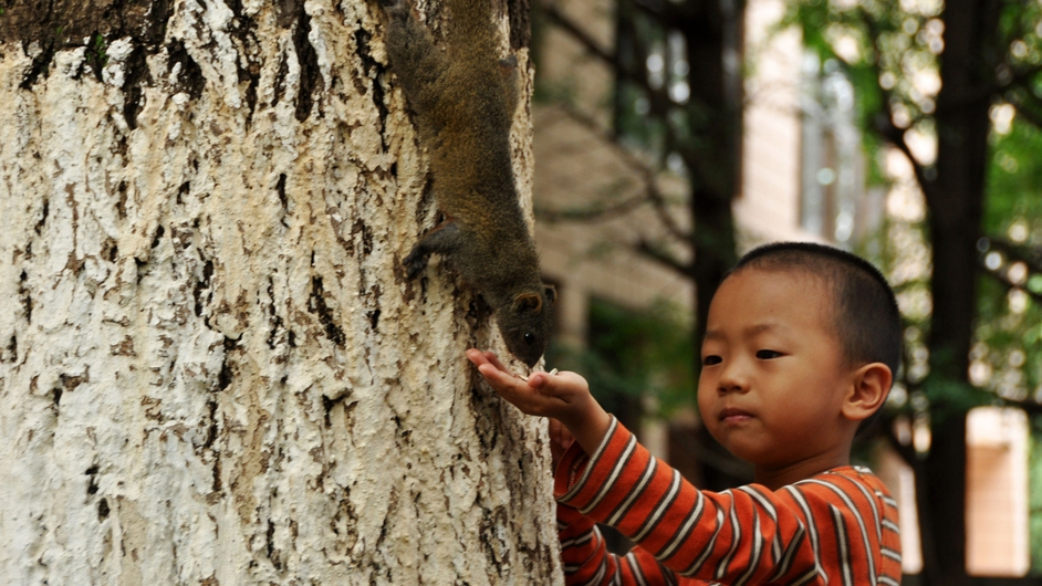 A young boy feeds a squirrel at Yunnan University, China