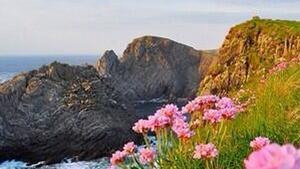 Sunny Malin Head in full bloom (Pic: Rónán McLaughlin)
