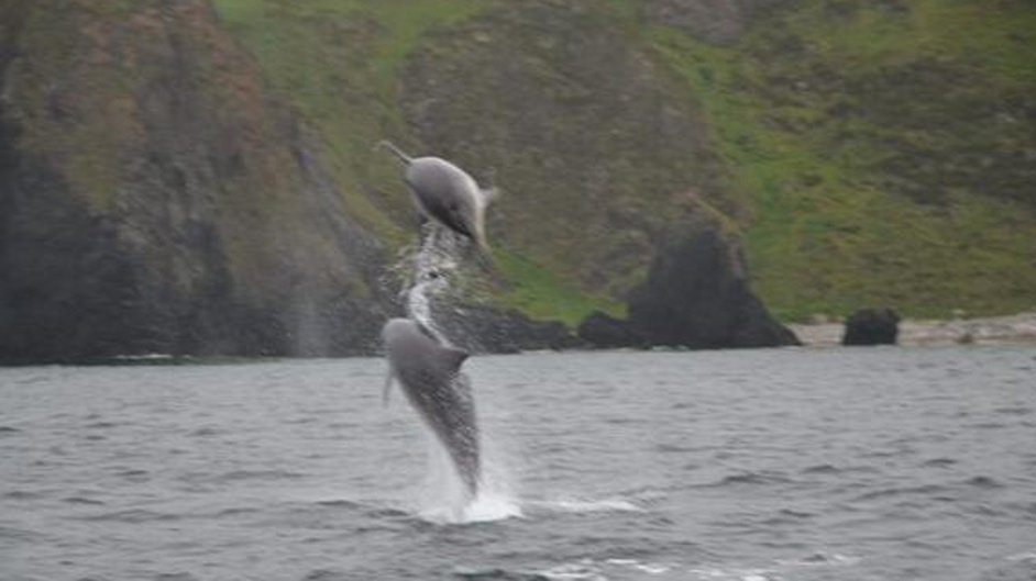 Dolphins Banba and Docky enjoy the waters off Co Donegal's Malin Head (Pic: @SunnyMalinHead)