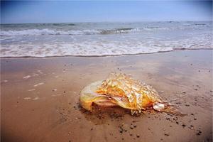 William Doolan took this photo of a lion's mane jellyfish at Brittas Bay in Co Wicklow (@wdamatsu)