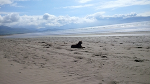 A dog relaxes and enjoys the view over Mount Brandon in Co Kerry (Pic: Fiona O'Riordan)