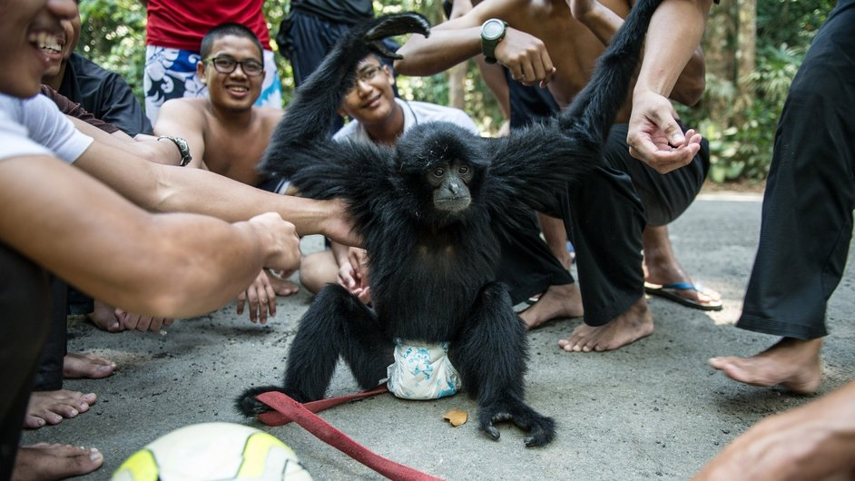 Malaysian youths play with a three-years old gibbon pet called 'Itam' at a park in Hulu Langat, near Kuala Lumpur