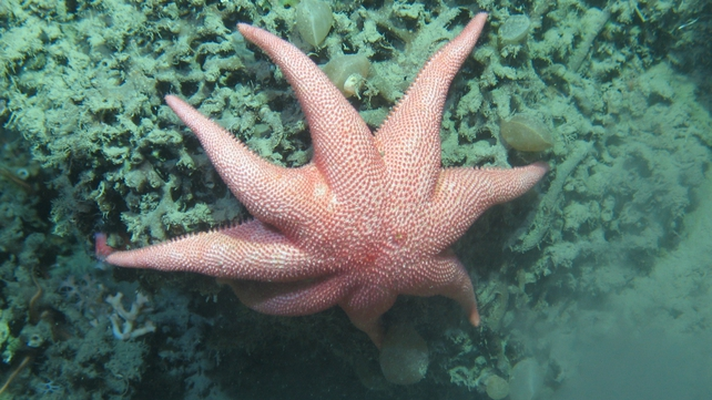 The information has been collected as part of the latest Marine Institute research cruise