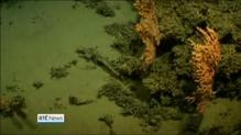 NUIG research reveals Atlantic Ocean insights