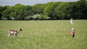 Deer versus baby in Dublin's Phoenix Park (Pic: Donal Martin)