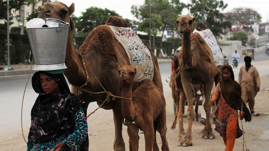 A Pakistani nomad woman carries a bucket with a container of camel milk on her head for sale in Karachi