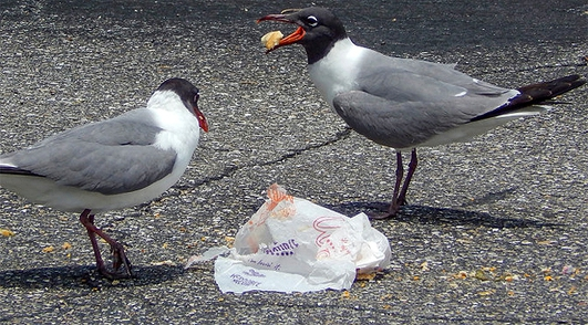 Lunch-Stealing Gulls, & St. Ives, Cornwall