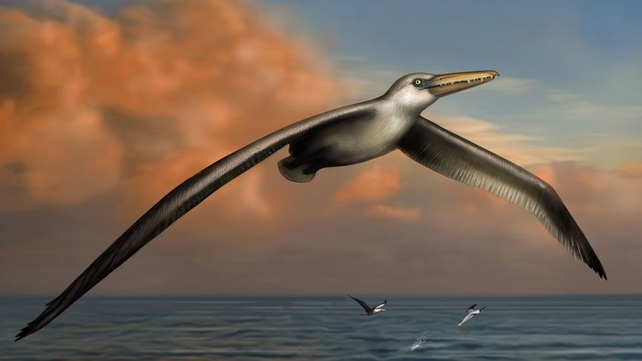 Scientists believe Pelagornis sandersi was an expert glider