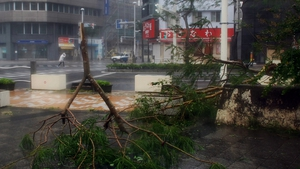 Trees collapsed by strong wind on a street at Naha