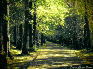 A country lane in Ferrybank, Co Waterford (Pic: Eamon Casey Power)