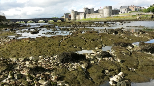 King John's Castle in Limerick at low tide on the Shannon across the Curragower Falls (Pic: Kieran Ryan)