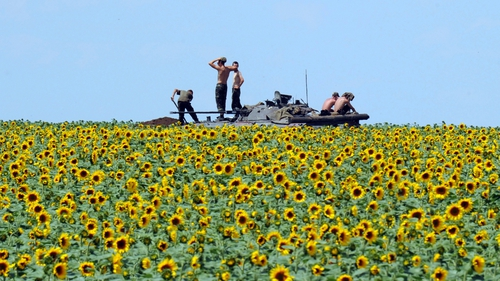 Ukrainian government soldiers sit on an armoured vehicle as they take up a position in a sunflower field south of Donetsk