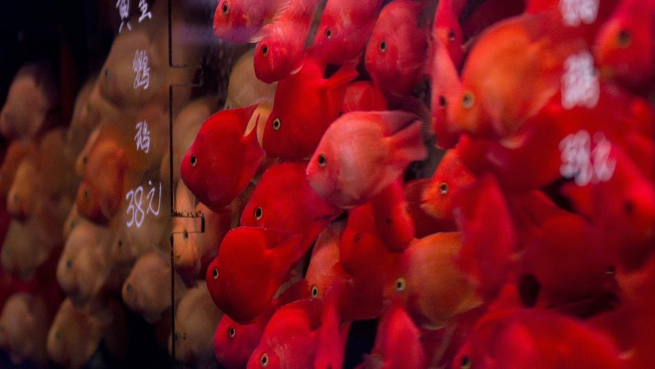 Goldfish market in Tung Choi Street, Hong Kong