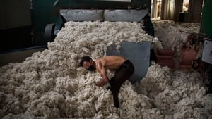 A Wool delivery arrives in China from Australia
