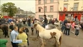 Crowds flock to Buttevant for Cahirmee Horse Fair