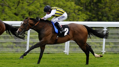 Contributer has been sold to Sheikh Mohammed's Darley