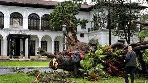 100-year-old Acacia tree  inside the Malacanang Presidential Palace in Manila was uprooted by strong winds