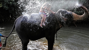 An elephant carrying tourists in Sri Lanka sprays water over them
