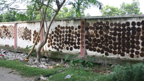 Images from Gaibandha: cow dung being dried on walls for use as fuel