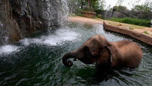 An elephant plays in a pool in South Korea's largest amusement park Everland