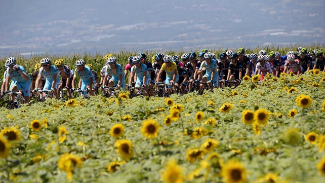 Vincenzo Nibali is tucked safely in the middle of the pack as they pass through a sunflower field