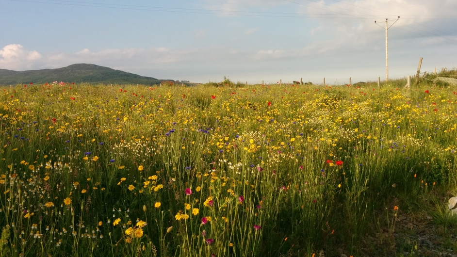The meadow at Sonas, Gyles Quay, Co Louth (Pic: Colin Perkins)