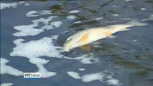 Investigation under way into Tolka fish kill