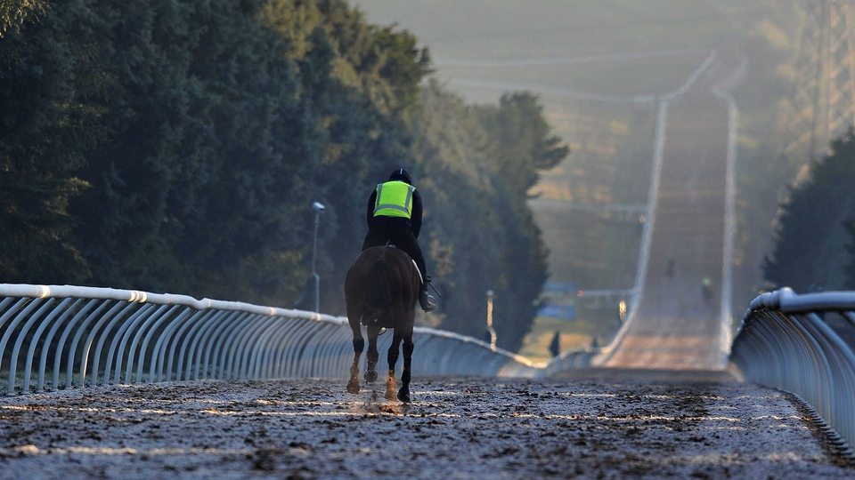 Horses work in frosty conditions at Ballarat in Victoria, Australia