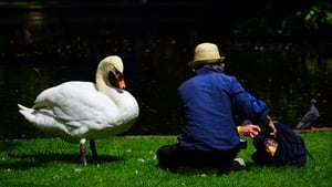 A man shares his lunch with a swan in St Stephens Green in Dublin (Pic: Peter Gaynor)