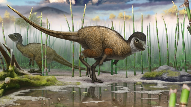 A colour illustration of the dinosaur - (Pic: Pascal Godfroit)