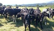 Morning Ireland: Dairy farmers welcome end of milk quotas