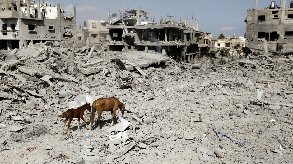 Mare and foal scavenge for food in Gaza